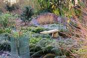 Bench in the Winter Garden at Mottisfont in January surrounded by ferns, Pachysandra terminalis, cornus and Edgeworthia chrys...