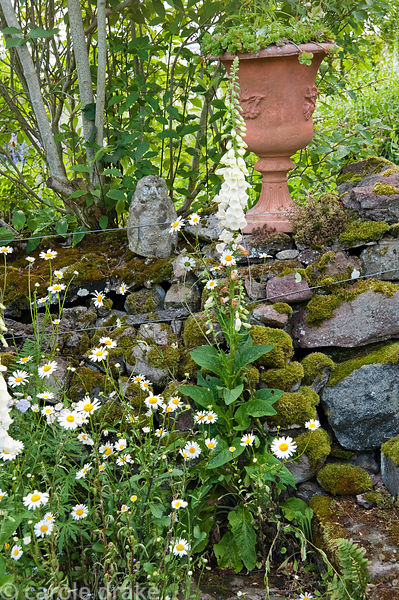 Dry stone wall with urn, stone owl and self seeded white foxglove. Mindrum, nr Cornhill on Tweed, Northumberland, UK