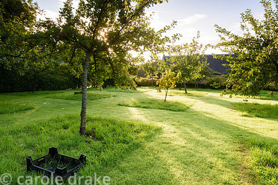 The Orchard at Broadwoodside, Gifford, East Lothian in September
