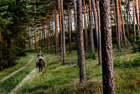 Danish woman riding horse in Thy woods, Denmark 32