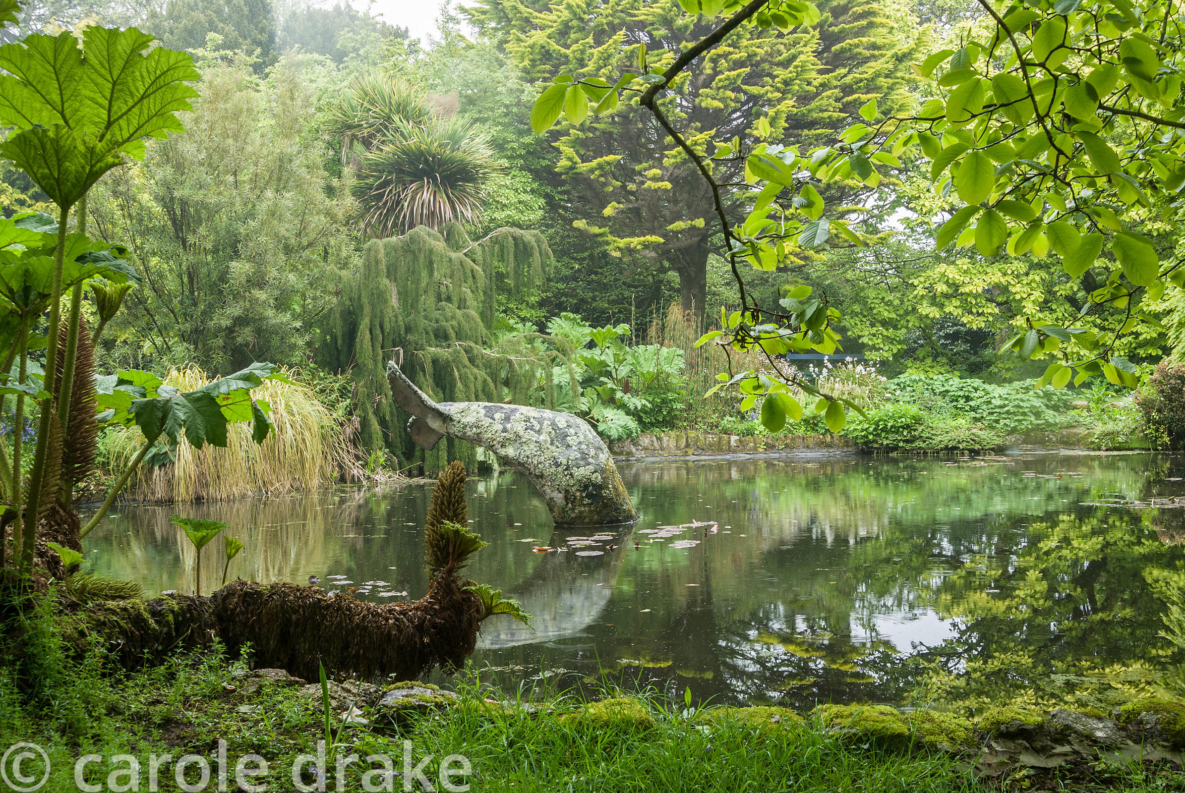 Whale's tail sculpture in the pond  surrounded by Gunnera manicata with trees behind including the weeping Lagarostrobos fran...