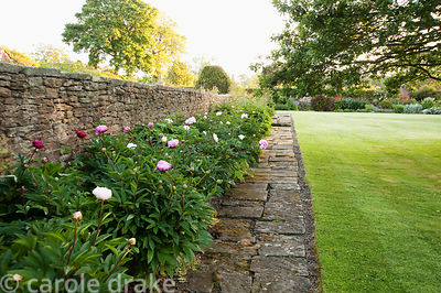 Peony border. Whalton Manor Gardens, Whalton, Northumberland, UK