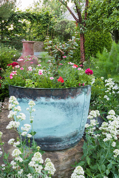 Decorative metal container planted with fuchsia and annuals including pelargoniums, with white Centranthus ruber 'Albus' in f...