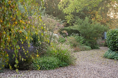 Gravel garden alongside the drive features Pennisetum alopecuroides 'Red Head', bronze fennel and Erigeron karvinskianus amon...