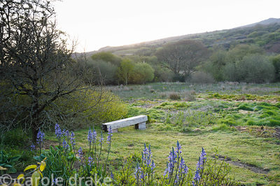 Simple timber bench beside marshy pasture with Garn Fawr behind.