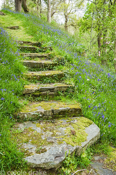 Mossy steps pass between sheets of bluebells and starry white greater stitchwort in The Dell.