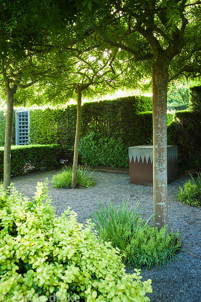 Gravelled courtyard area beside the studio with four weeping ash, Fraxinus excelsior 'Pendula' forming a shady canopy with st...