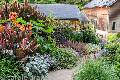 Path surrounded by lush planting including cannas, silvery plectranthus, ricinus, dahlias and pennisetum including dark purpl...