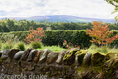 View of the Lammermuir Hills from the garden at Broadwoodside, Gifford, East Lothian in September