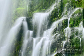 Waterfall Lower Proxy Falls - North America, USA, Oregon, Lane, Lower Proxy Falls (Cascade Range, Willamette National Forest)...