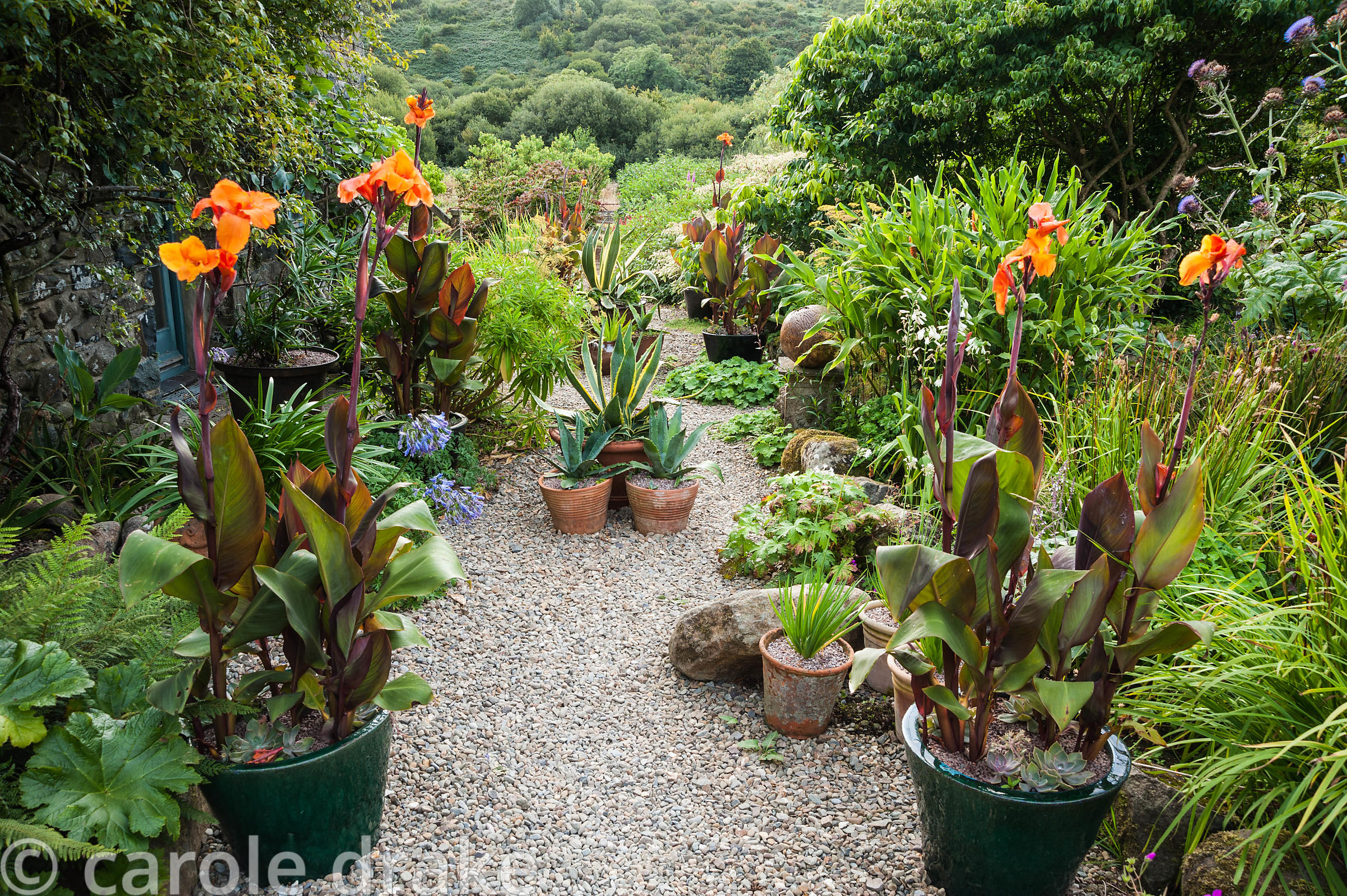 The Courtyard garden features many pots planted with a variety of succulents, orange cannas and other plants surrounded by se...