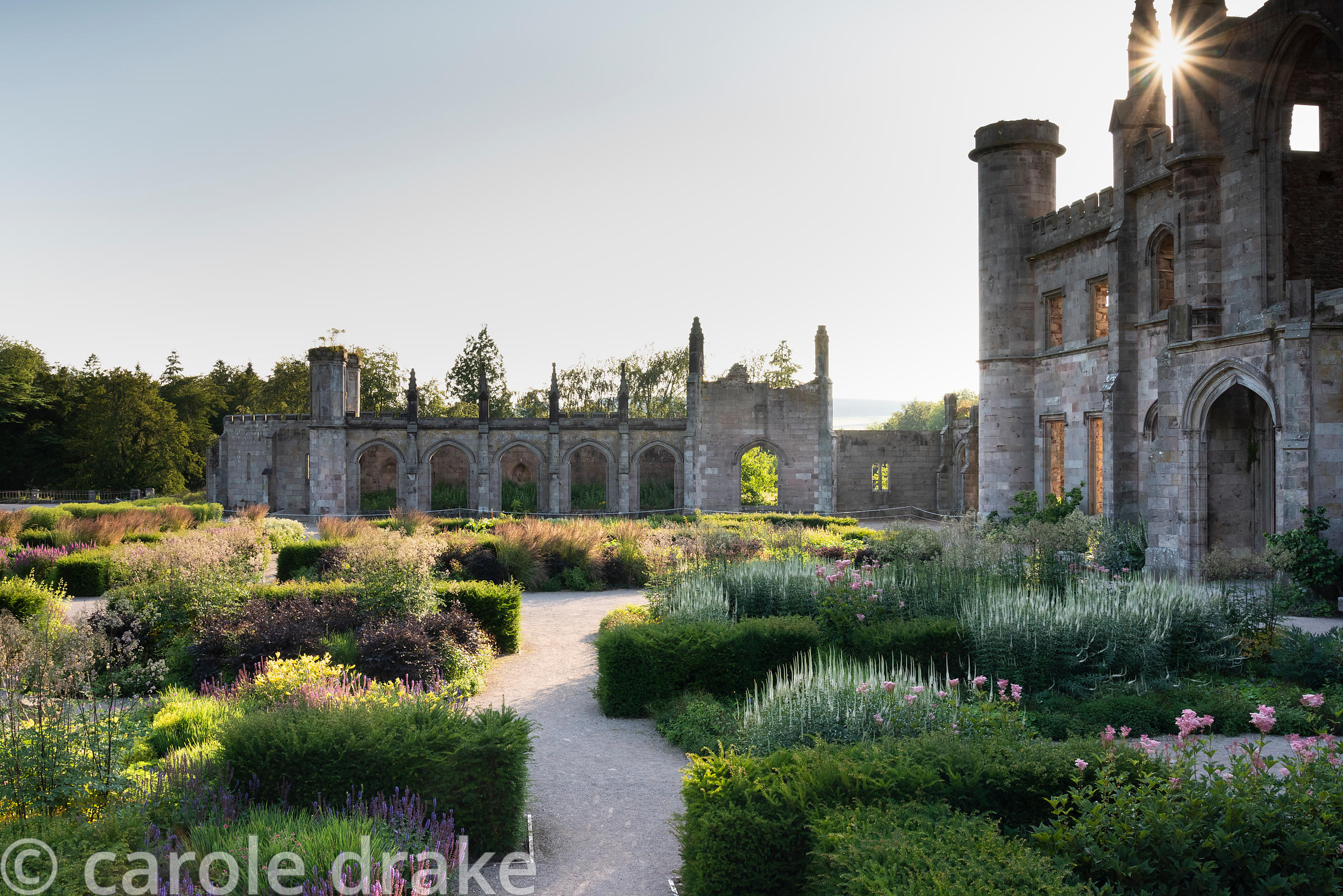 Parterre Garden designed by Dan Pearson at Lowther Castle, Penrith, Cumbria in July with low blocks of yew framing herbaceous...