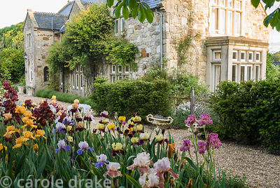 Bed of mixed irises with house beyond. Old Rectory, Kingston, Isle of Wight, Hants, UK