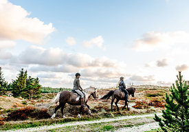 Danish women riding horses in Thy woods, Denmark 6