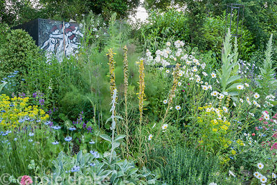 The Mediterranean bank, one of the few areas of the garden with good drainage, features verbascum, catmint, penstemons, Stach...