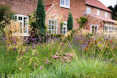Verbena bonariensis, Stipa gigantea, heleniums and Hylotelephium 'Matrona' in a garden in rural Nottinghamshire in September