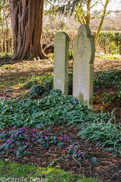 Gravestones beside the garden of Old Church Cottage with trunk of old yew tree beyond.