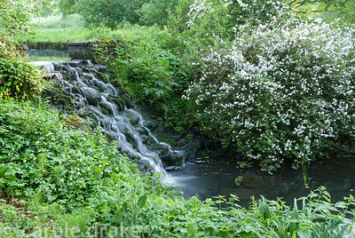 One of the garden's 18th century cascades surrounded by deutzia and wild floers. Minterne, Minterne Magna, Dorchester, Dorset...