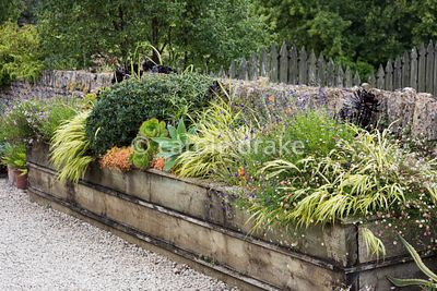 Wooden raised bed at Bourton House, Moreton-in-Marsh in August planted with Erigeron karvinskianus, Hakonechloa macra 'Aureol...