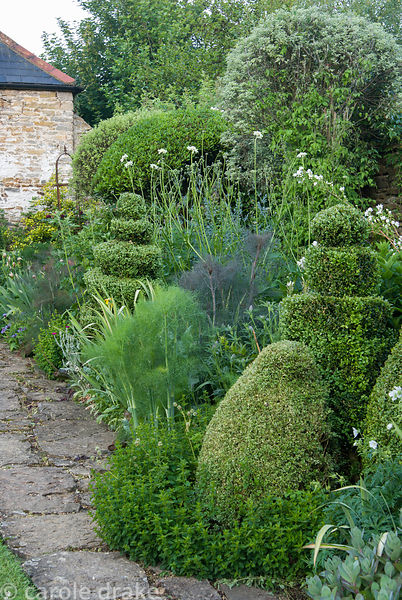 Mixed border including clipped box shapes amongst perennials and herbs including fennel, sedums, Cephalaria gigantea. Private...
