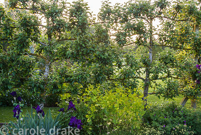 Formal kitchen garden is defined by espaliered apple trees. Ivy Croft, Leominster, Herefordshire, UK