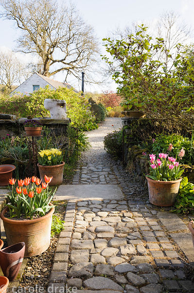 A cobbled path runs through the front garden framed with pots of tulips including 'China Pink' and 'Ballerina'.