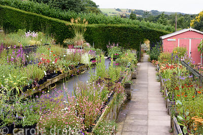 Plant sales area with opening in hedge leading to the garden at Dove Cottage Nursery & Garden, Halifax, West Yorkshire