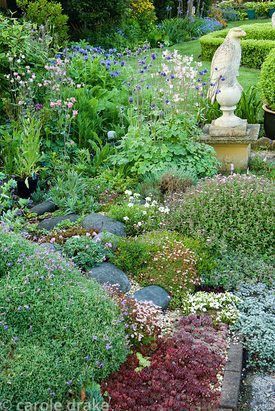 Mosaic of interlocking planting includes sempervivums, saxifrages and low growing alpines mix with taller aquilegias, persica...