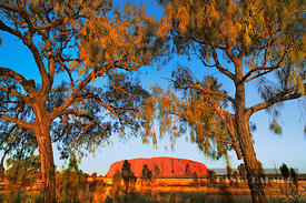 Ayers Rock at sunset - Australia, Australia, Northern Territories, Uluru-Kata-Tjuta National Park, Ayers Rock (Red Center, Ou...