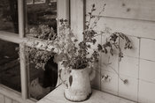 Mixed bouquet of drying wildflowers in old coffeecan - sepia