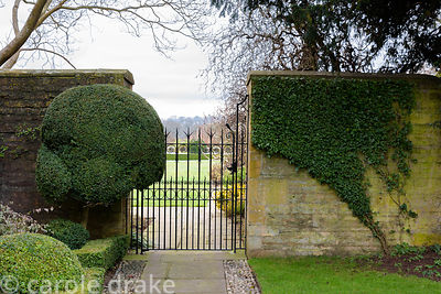 Ivy, limited to the wall surface, at Bourton House garden in the Cotswolds in January