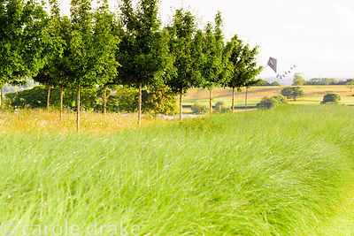 Hornbeam avenue underplanted with long grasses and meadow flowers with Blagdon Lake beyond at the Yeo Valley Organic Garden, ...
