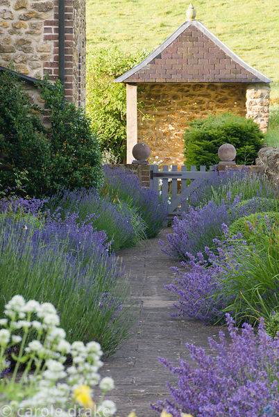 Path edged with lavender, catmint, irises and clipped box leads of gazebo at the end of the rill garden. Private garden, Dors...