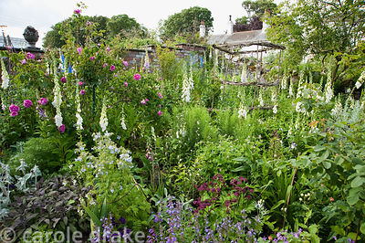 Border planted with roses, self seeded foxgloves, purple sage, silvery stachys, astrantias, nepeta and hardy geraniums. Mindr...