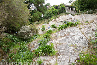 The quarry which supplied stone to build the house, colonised by agapanthus, with gazebo above. Coleton Fishacre, Kingswear, ...
