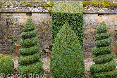 Spirals, cones and buttresses of box in the White Garden at Bourton House in the Cotswolds in January