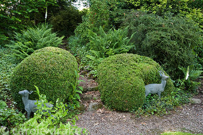 Sculptures of fawns against clipped box in shady area of the garden with ferns behind. Mindrum, nr Cornhill on Tweed, Northum...