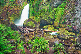 Waterfall Wahclella Falls in Pacific rainforest - North America, USA, Oregon, Multnomah, Tanner Creek, Wahclella Falls (Casca...