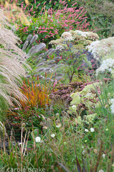 A mass of flowers and seedheads in the gravel garden including Selinum wallichianum, Libertia peregrinans, Pennisetum alopecu...