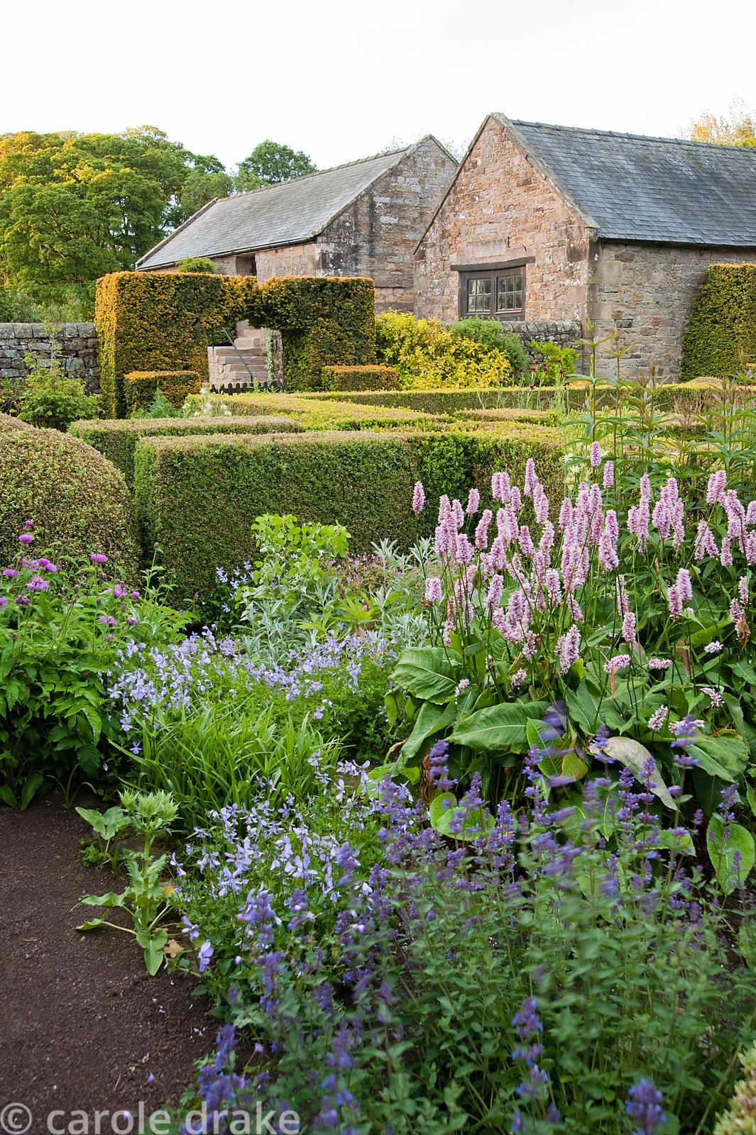 The Flower Garden features strong blocks of box and yew that frame cottage garden plants and flowers includig persicaria, Vio...