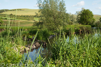 The Bowmont Water forms one of the garden's boundaries. Mindrum, nr Cornhill on Tweed, Northumberland, UK