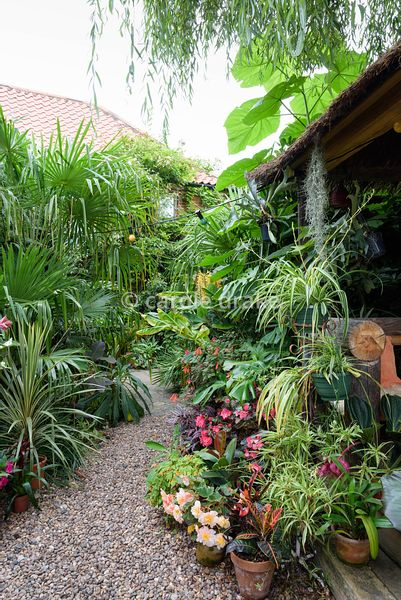 Pots of begonias, clivias, ficus and spider plants cluster around the steps of a Jungle Hut constructed using recycled telegr...