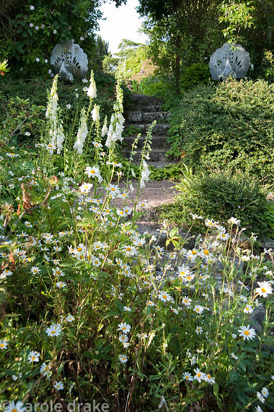 Self seeded white foxgloves and oxeye daisies with steps beyond framed with stone peacocks. Mindrum, nr Cornhill on Tweed, No...