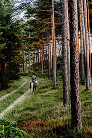 Danish woman riding horse in Thy woods, Denmark 31