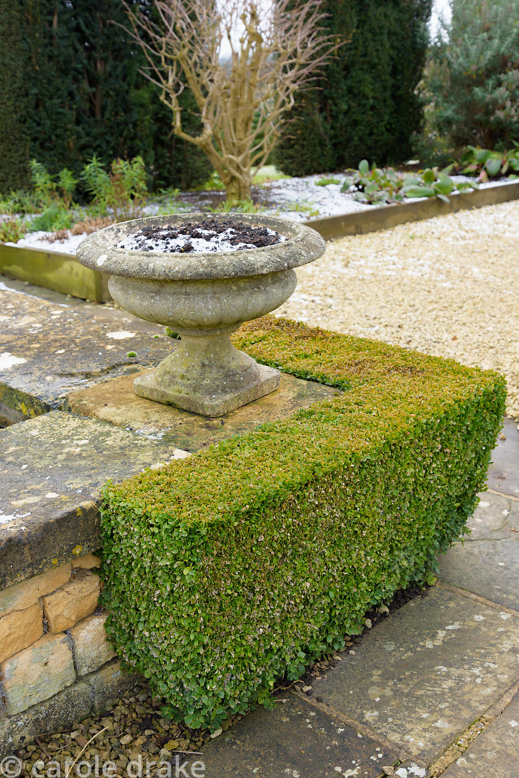 Box corners on a raised rectangular pond in the White Garden at Bourton House in the Cotswolds in January
