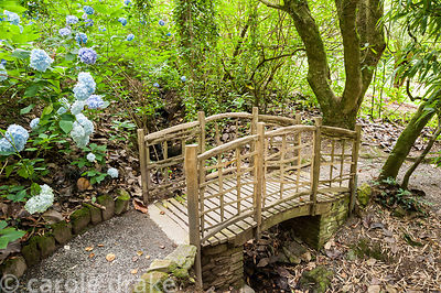 Rustic chestnut bridge over the stream in the lower part of the garden. Coleton Fishacre, Kingswear, Devon, UK