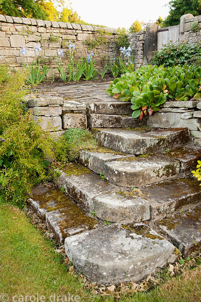 Stone steps leading up to terrace with irises and bergenias. Whalton Manor Gardens, Whalton, Northumberland, UK