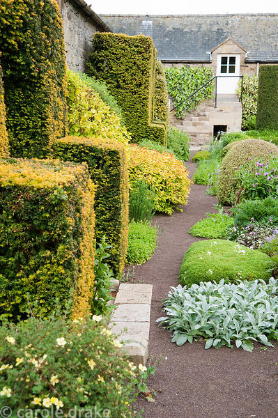 The Formal Garden at the front of the house features box and yew topiary with mounds of saxifrage, stachys and lamium. Herter...
