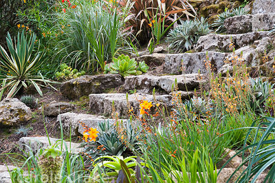 Bulbine frutescens, celmisias and succulents line stone steps leading down the steeply sloping garden.
