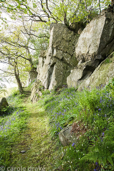 Outcrops of rock emerge from sloping ground covered with bluebells and starry white greater stitchwort at the top of The Dell...